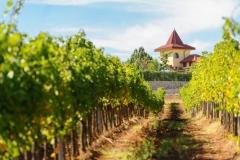 Rupel-Winery