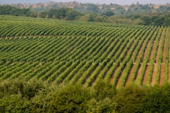 vineyards-Bulgaria-02